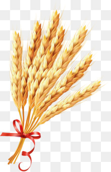 Grasses Wheat Ear Cereal Drawing Free Png Image Grasseswheatear